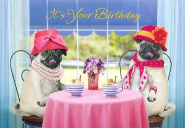 pugs  dogbreedgifts  pug greeting cards, notecards, Birthday card